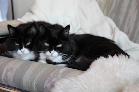 twoheadedcat-1